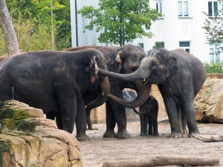 Elefanten Zusammenführung