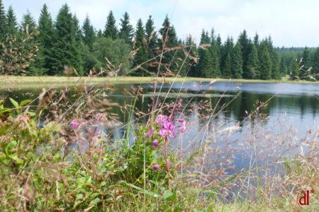 Schwarzer Teich Altenberg
